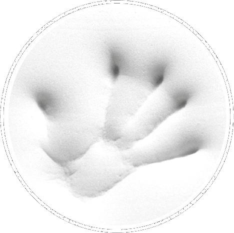 Tempur handprint