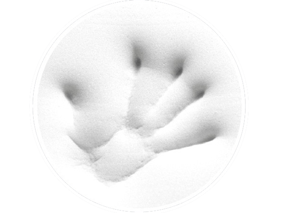 Tempur handprint wide